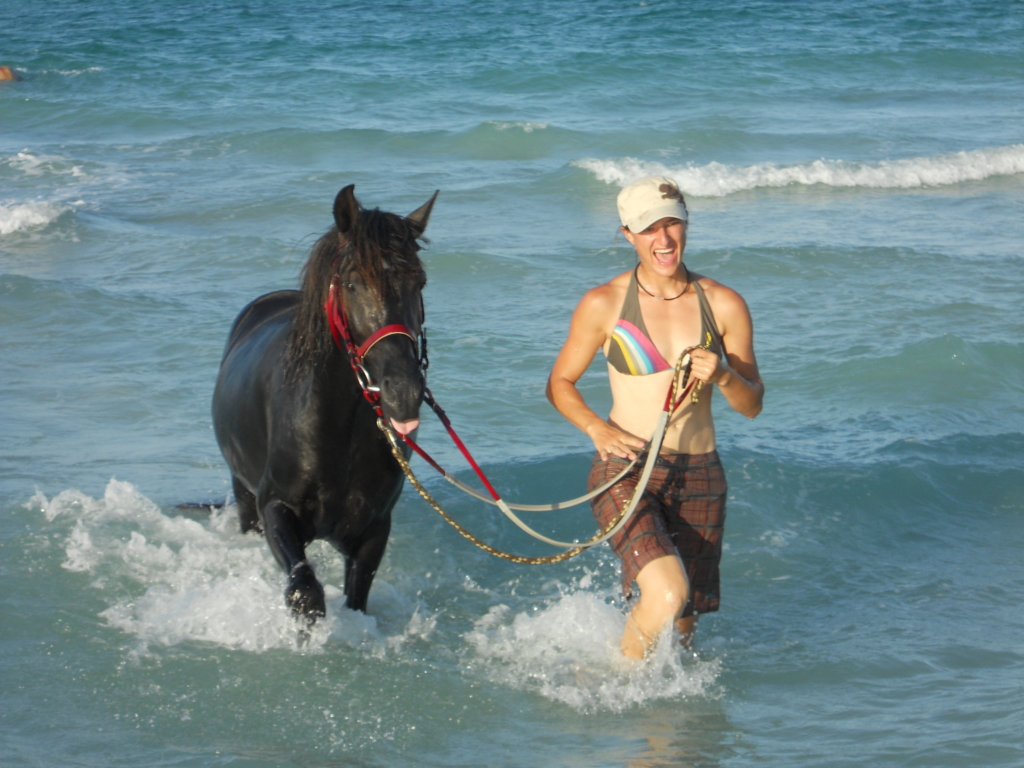 Arab-Barb stallion in seawater
