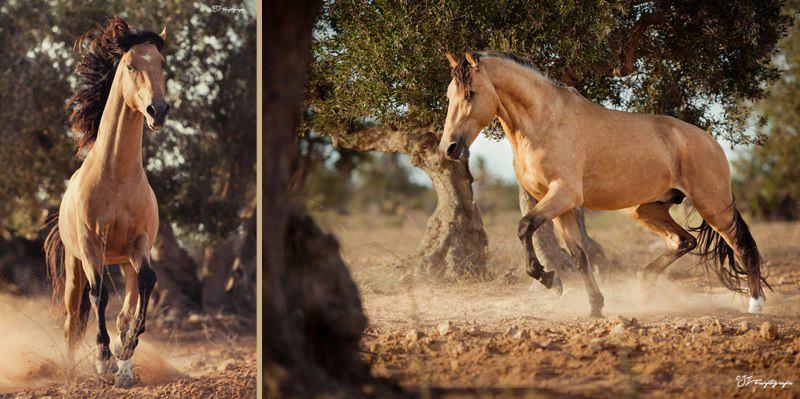 Running between olive trees