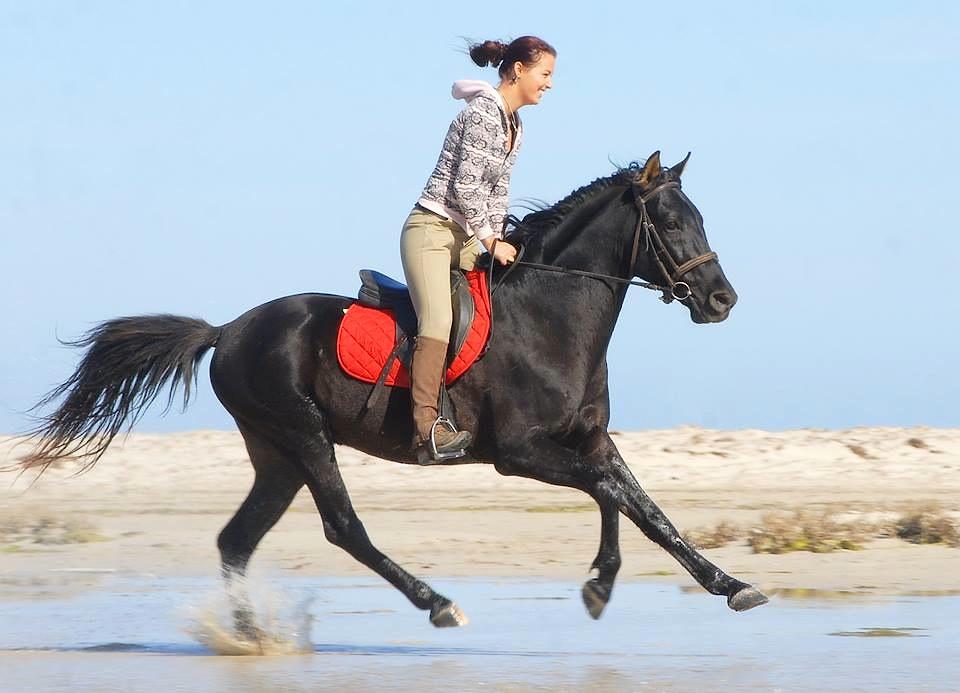 Horse Gallop in the beach