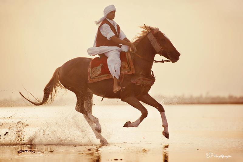 free gallop in beach, Tunisia