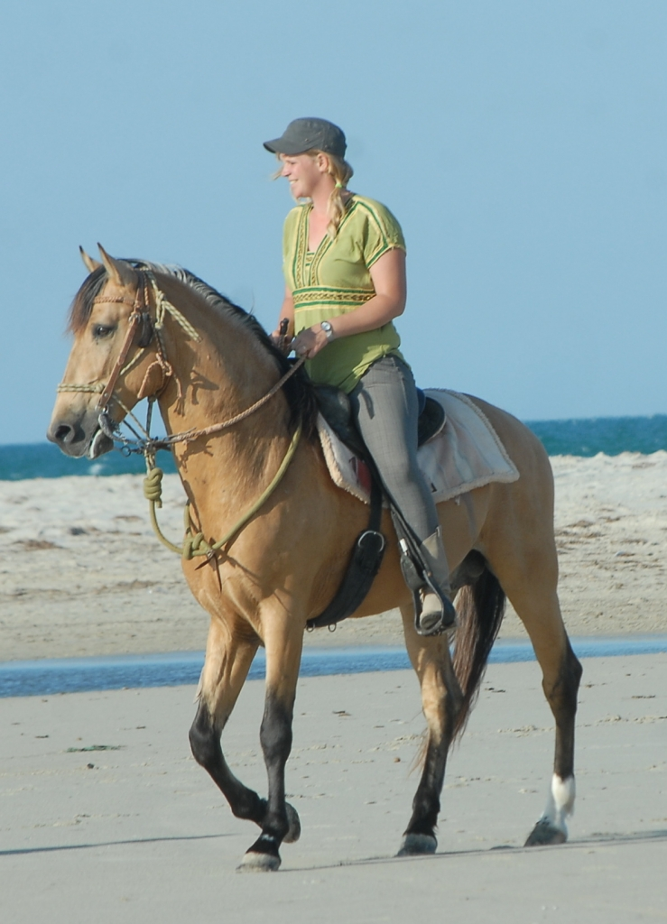 Horseback riding trip in Djerba