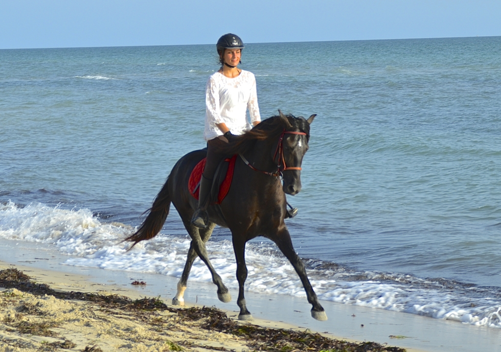 Horseback beach riding