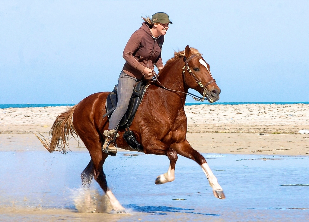 Galloping on fine sand beach