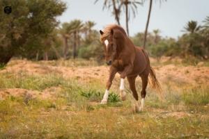 Horse Djerba Holidays