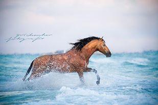 Horse at the sea