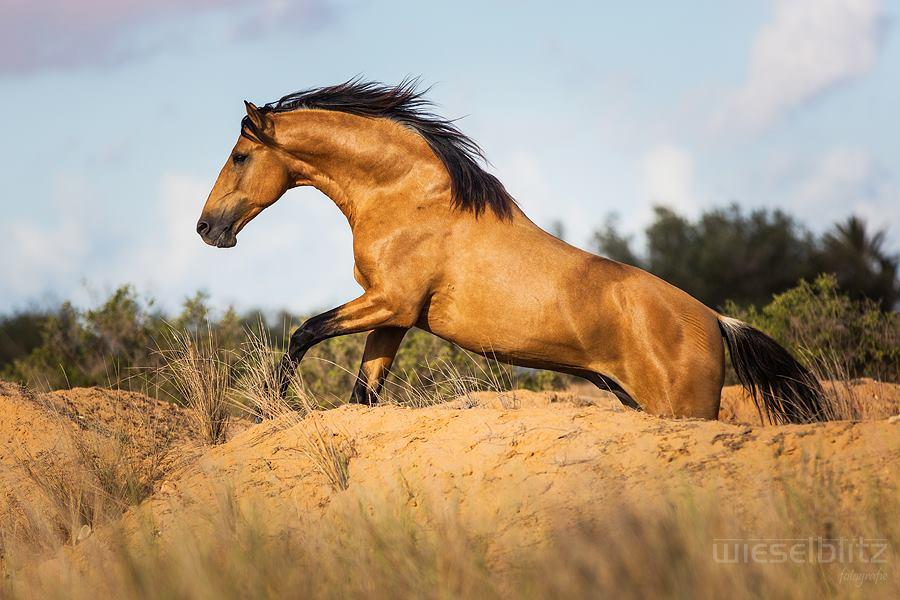 Maktoub in horse photography workshop