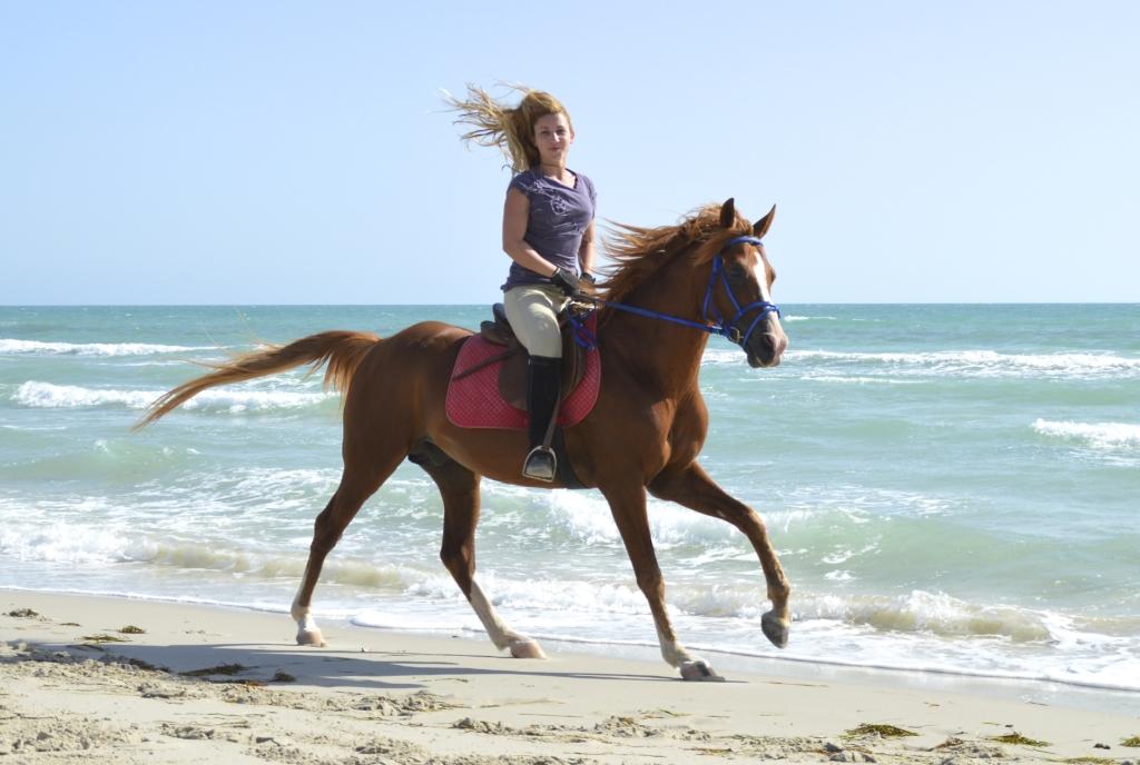 Galloping on the beach - Flamingo island