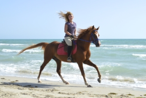 Horse Riding Tunisia