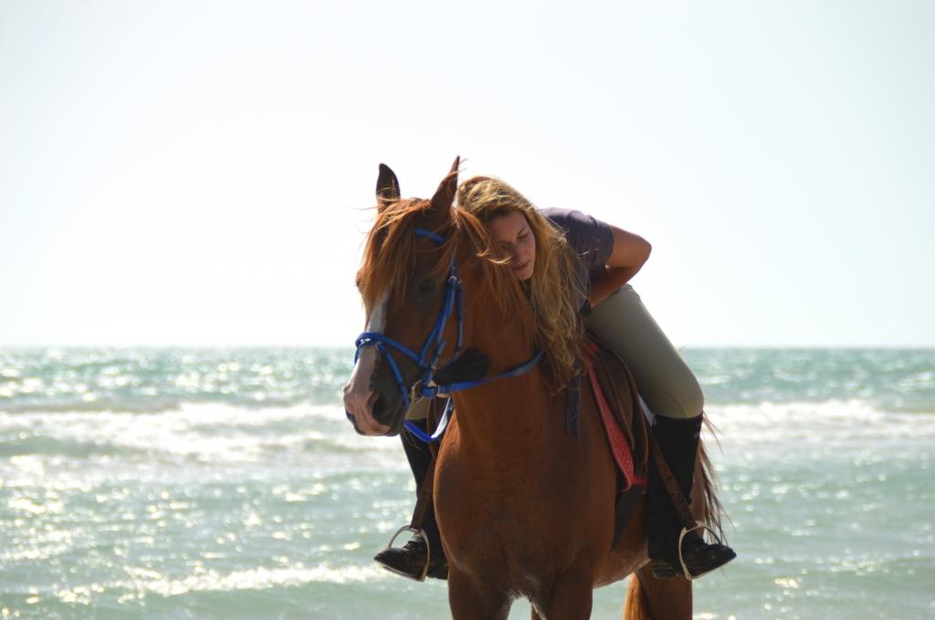 Arabian Horse on the beach