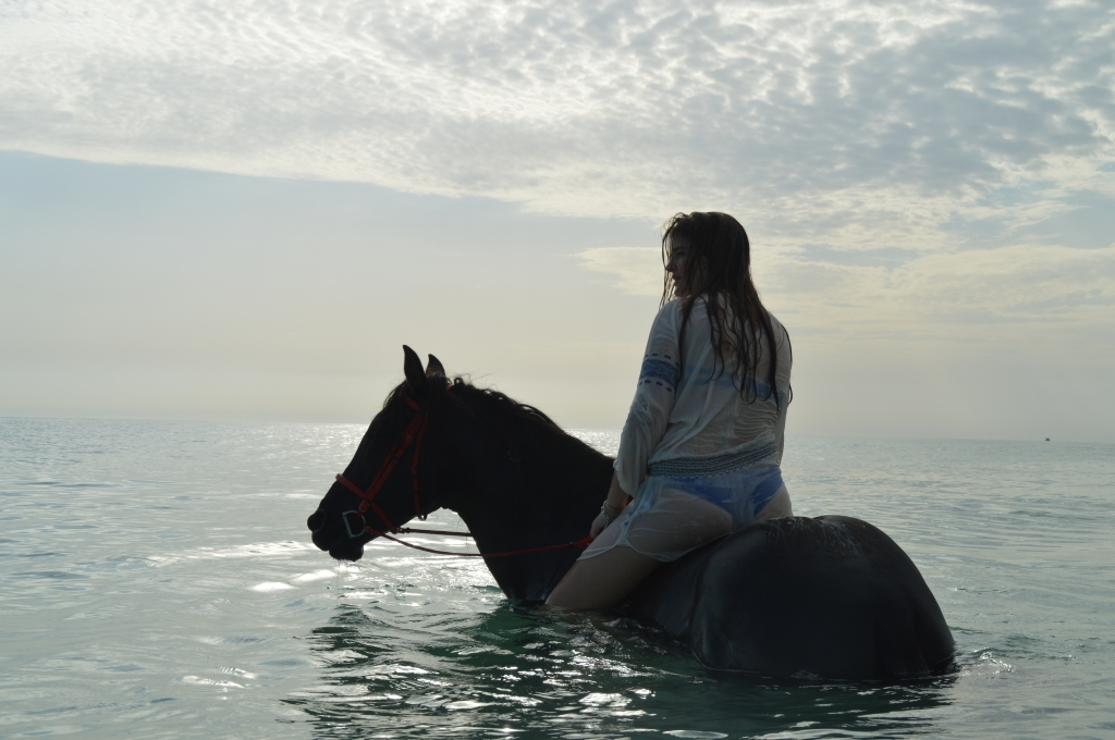 swimming with an arab-barb stallion