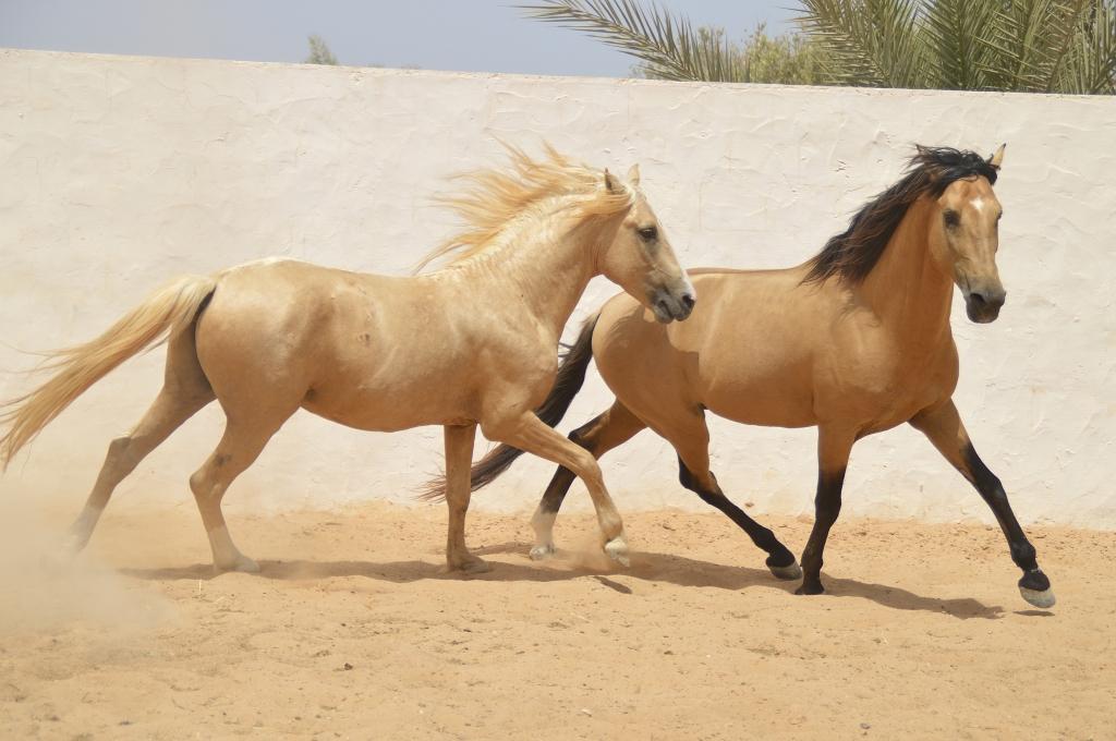 Horses free in paddock