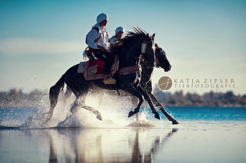 Two horses running on the beach, Tunisia