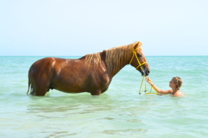swimming with horses photography
