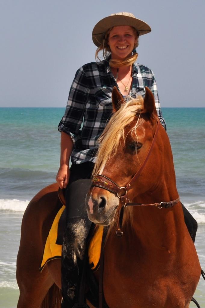 barb stallion bitless on the beach