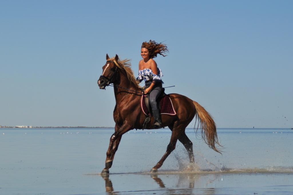 gallop through the lagune