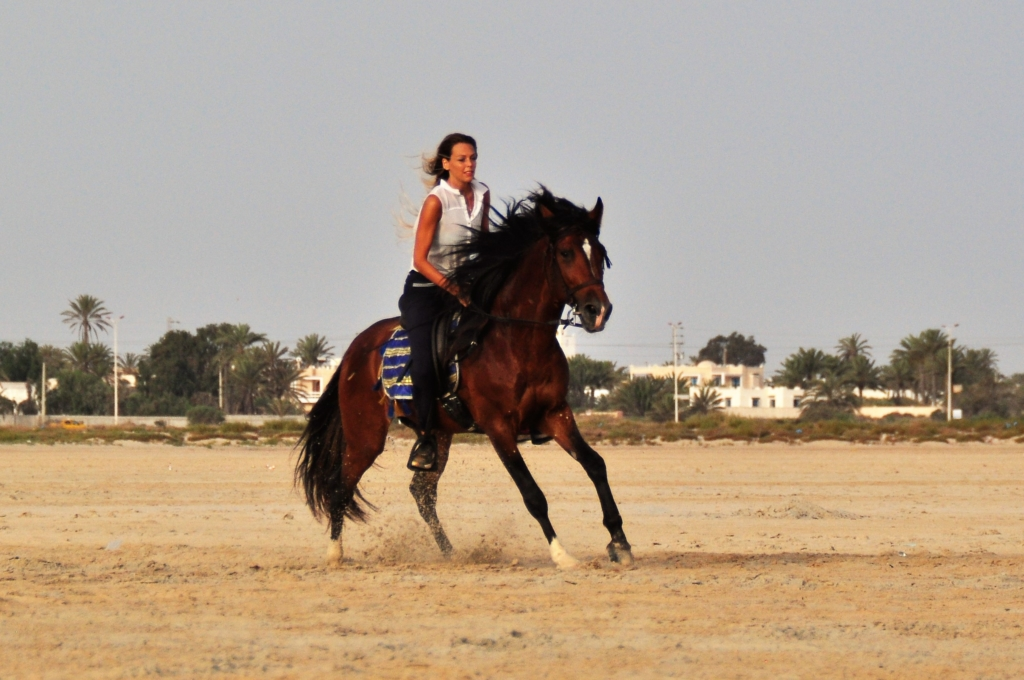 canter with barb horse