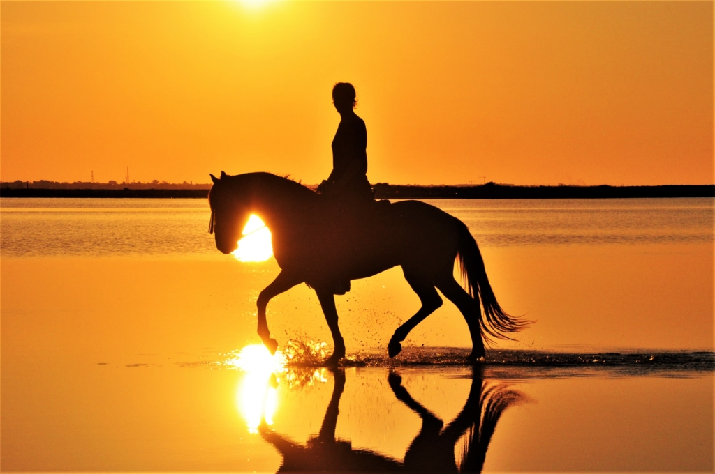 trot through the sunset